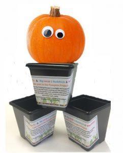 pumpkin on pot